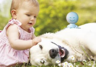 gedrag hond baby Zylkène